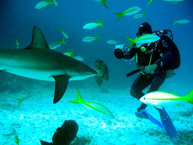 Buceando entre tiburones en Bahamas