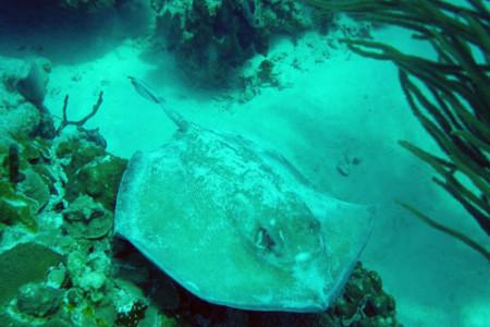 Banco Chinchorro, atolón del caribe mexicano