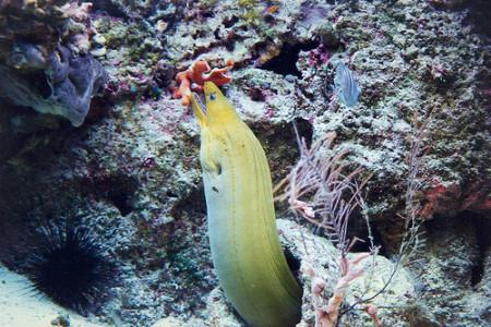 La anguila, ser con forma de serpiente