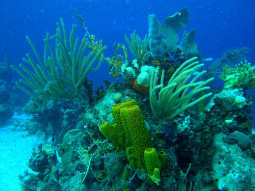 Almacen verde 8 de junio d a mundial del oc ano - Fotos fondo del mar ...