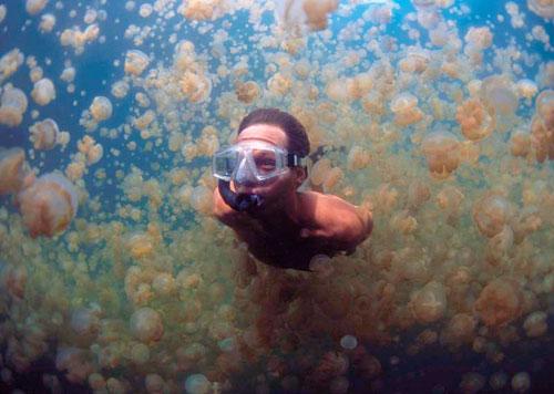 laguna de las medusas