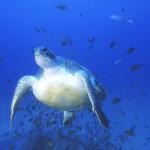 La grave contaminación del mar Mediterráneo