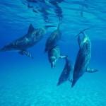 Delfines, más cerca del peligro de extinción