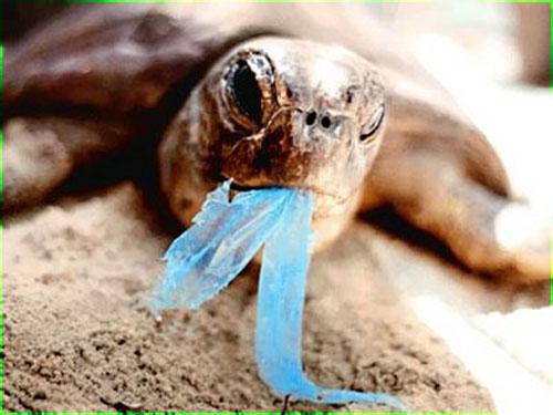 Tortuga comiendo plástico