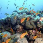Aprenda a conocer el fondo marino