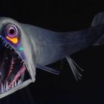 El todavía desconocido fondo oceánico
