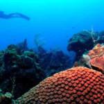 Parque Corales, descubriendo arrecifes coralinos
