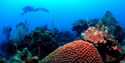 Parque Corales
