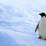 La vida en el polo norte y en el polo sur