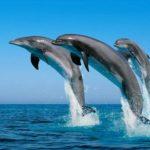 Los delfines, mamíferos fascinantes