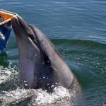 El delfín Gaspar vuelve a las Rías Baixas