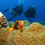 Bucear en Tahití, entre tiburones y delfines