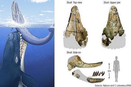 Leviathan melvillei, el cachalote asesino