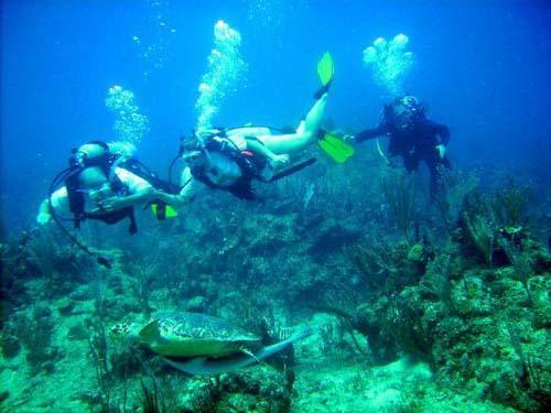 puerto rico buceo 2