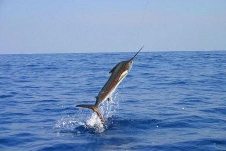Practicar pesca deportiva en Costa Rica