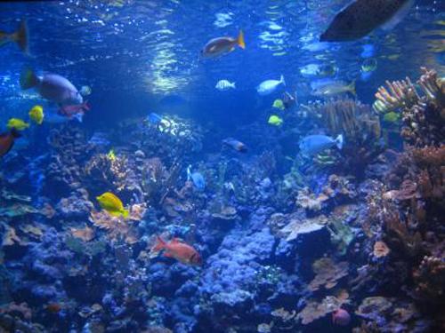 fondo-del-mar