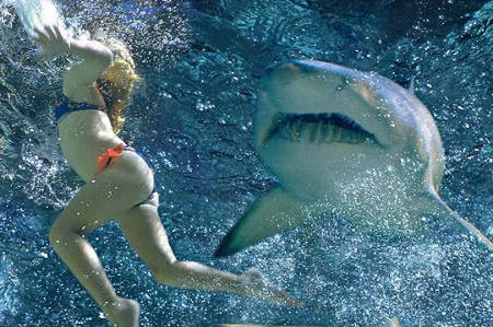 ¿Qué hacer ante el ataque de un tiburón?