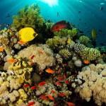 El coral, una maravilla marina
