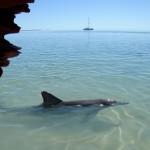 Visita a Shark Bay, en Australia