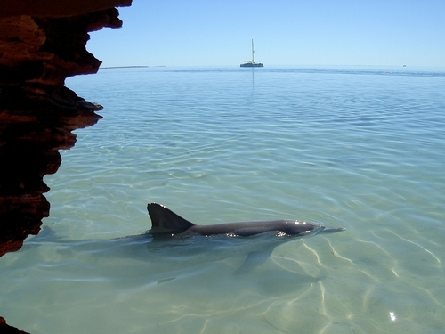 Monkey mia en Shark Bay