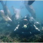 Bucear con lobos marinos en Puerto Madryn