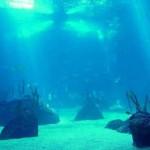 ¿Qué es la oceanografía?