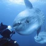 Algunos animales marinos raros