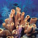 Las maravillosas esponjas marinas