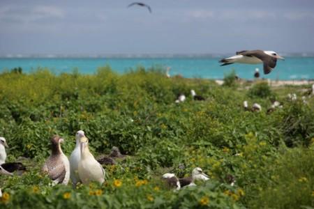 Las Islas Midway