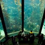 El acuario de la Bahía de Monterrey