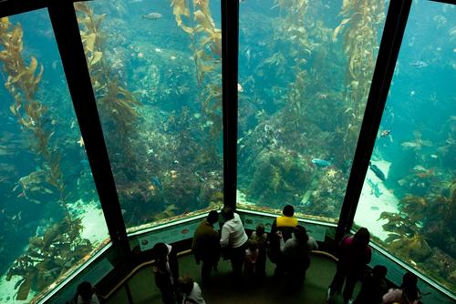acuario monterrey