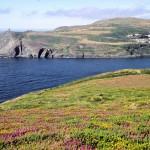 La fauna marina de la Isla de Man