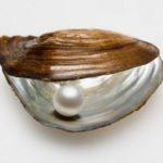 Las perlas, regalo de los mares
