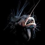 Fanfin o el demonio del mar