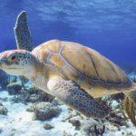 Bucear por las Islas Caimán