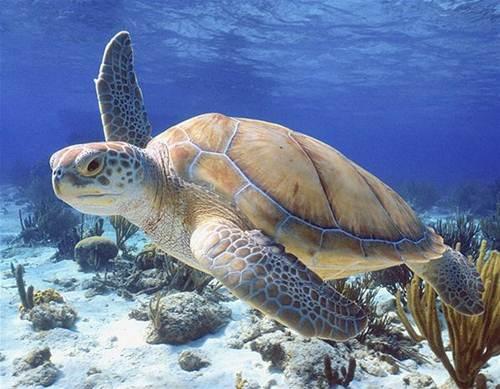 bucear islas caimán