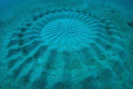 El Pez Globo y sus curiosas creaciones submarinas