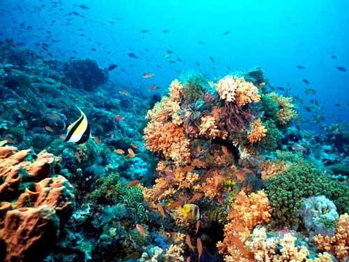Triangulo de Coral
