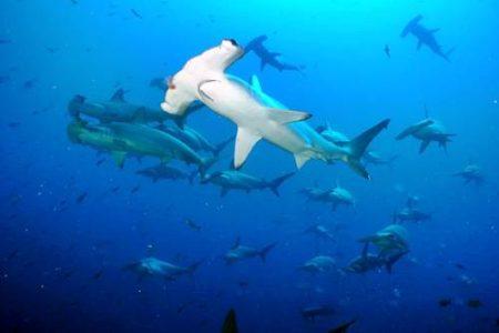 Bucear en las Islas Galápagos