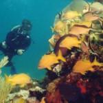 Escuelas de buceo en Cancún