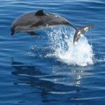 Delfines y ballenas en Mazarrón